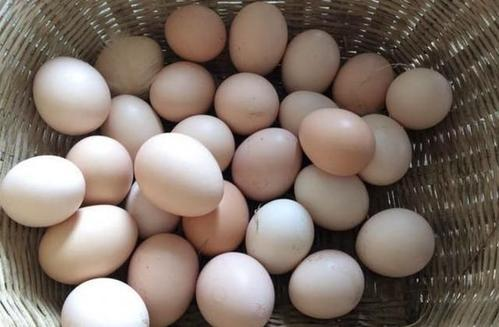 每天吃七八个鸡蛋有害吗