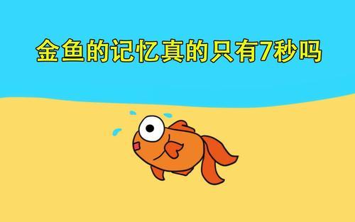 鱼的记忆真的只有7秒吗