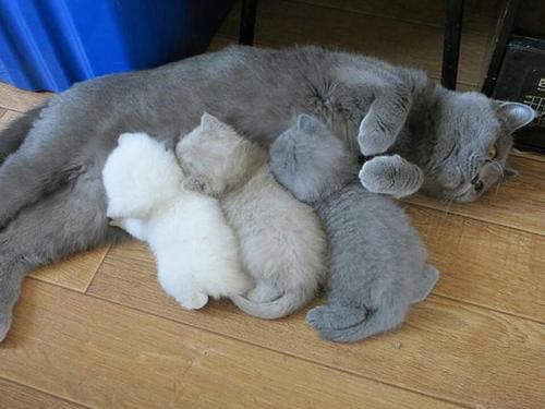 猫怀孕几个月生产
