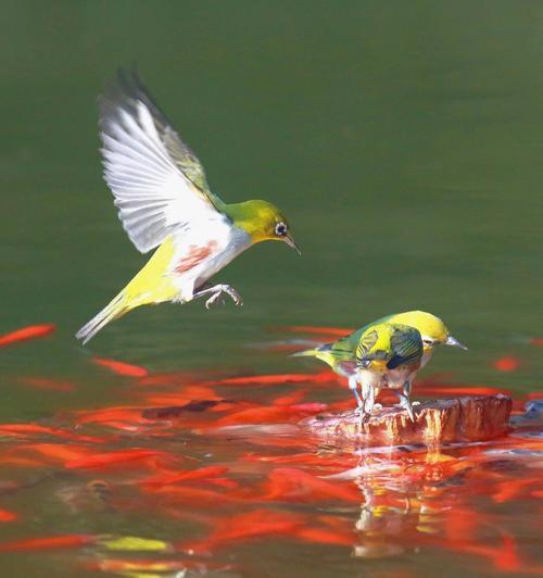 近水知鱼性近山识鸟音的意思